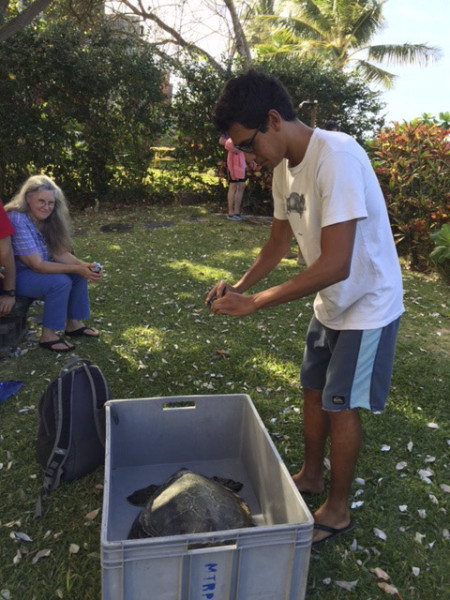 Daniel of the turtle rescue program takes pictures before transporting the turtle. ©2015 Susan Scott